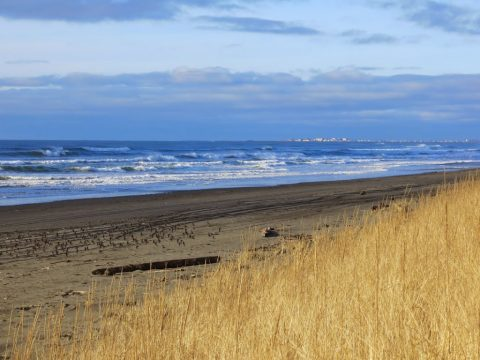 Projecting the Future of the Grays Harbor Coastline