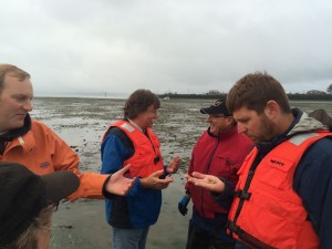 WA Coastal Program Manager Casey Dennehy looks at a Ghost Shrimp that have been causing big challenges to shellfish growing.