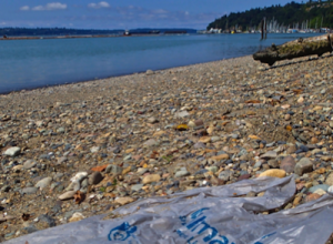 Washington Chapter Beach Cleanups Continue